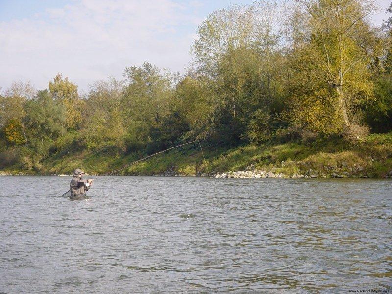 Nymphenfischen am Altrhein